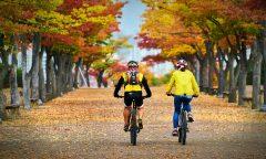 Cyklisté v podzimní krajině