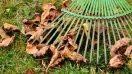 Spadané listí a hrábě
