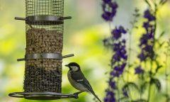 Pták sedící na krmítku
